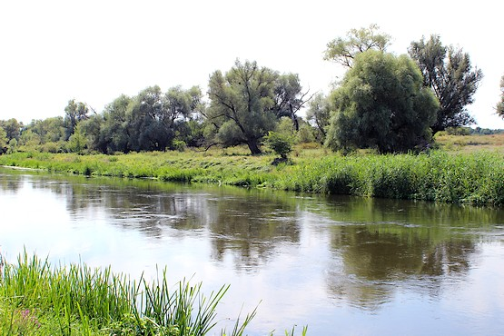 Прохладная гладь реки