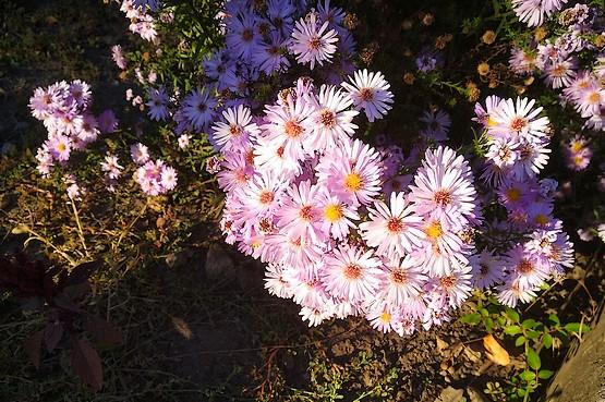 Цветы на последних километрах пробежки