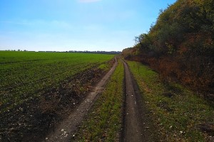 Дорога у посадки