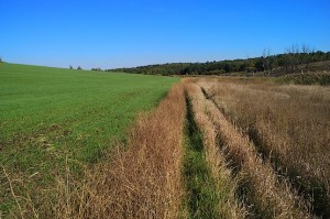 Дорога в траве, начался трейл