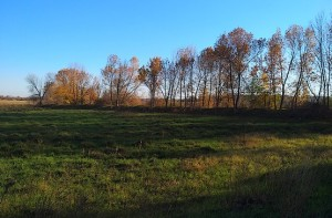 Фотография с рисунком осени