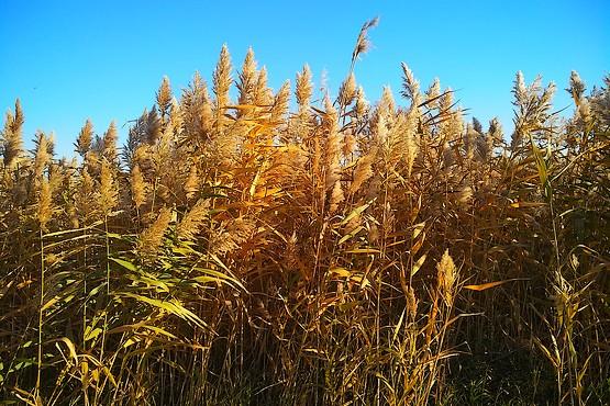 Фотография золотой осени