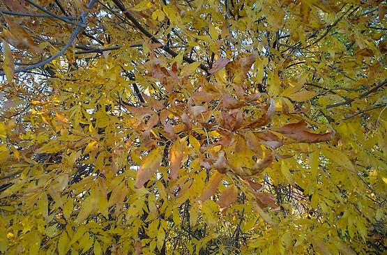 Желтые листья в лучах солнца