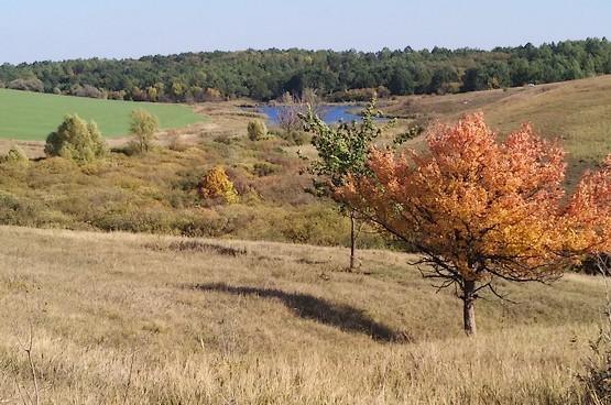 Осень начинает украшать природу