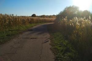 Осень в лучах солнца прекрасна
