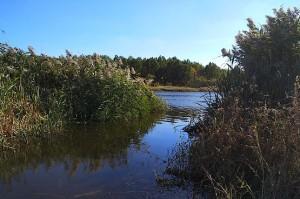 Расчищенное место для рыбалки