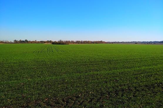 Сочная зелень полей Первомайского района