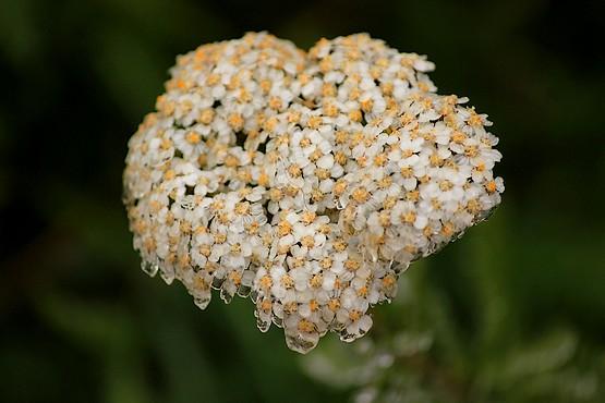 Ледяное сердце из цветов