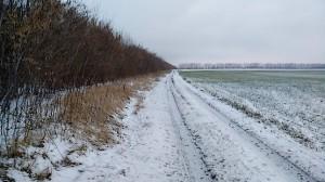Бег зимой по полю