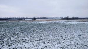 Фото с пробежки у зелёного поля