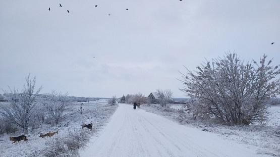 Зимний пейзаж с пробежки на 25 км