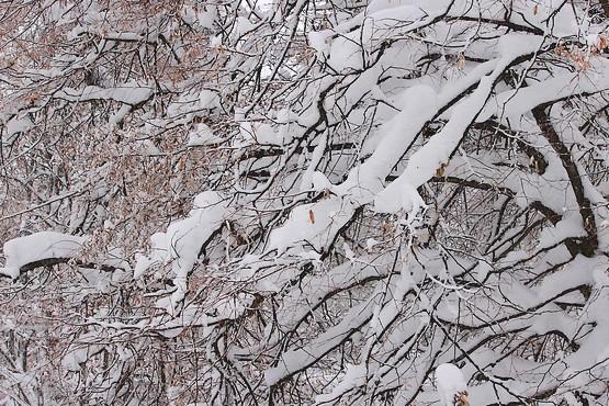 Живописный снег на деревьях