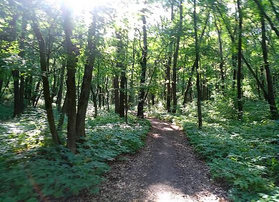 Бег по летнему лесу
