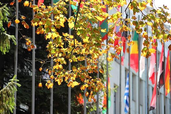 Листья уже желтеют