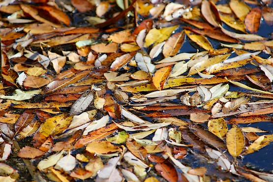 Листья на поверхности воды