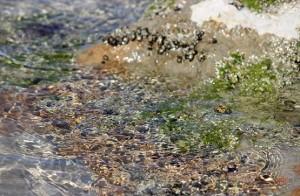 Прозрачная вода Персидского залива