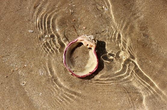 Ракушка в прозрачной воде Персидского залива