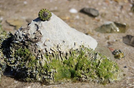 Ракушки на камнях