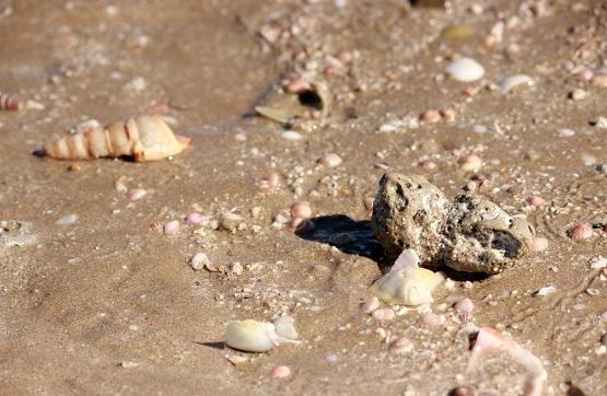 Разнообразные ракушки на берегу