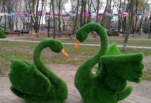 Лебеди в Балаклее