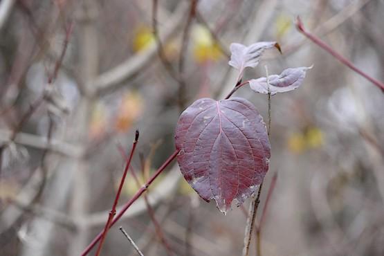 Последние листья на деревьях