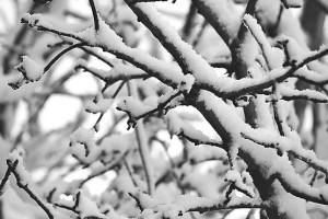 На ветви лег снег