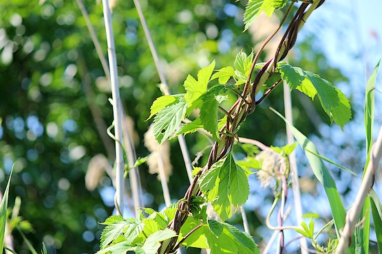 Сочная зелень в лучах солнца