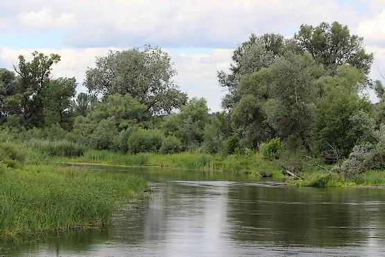 Деревья у реки Северский донец