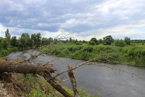 Поломанное дерево у реки