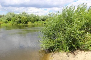 Сочная зелень у реки