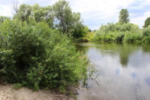 Всё в зелени у реки