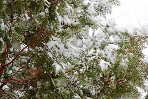 Медленно падал снег