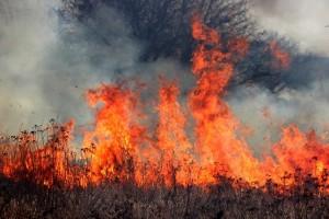 Взлетающие языки пламени