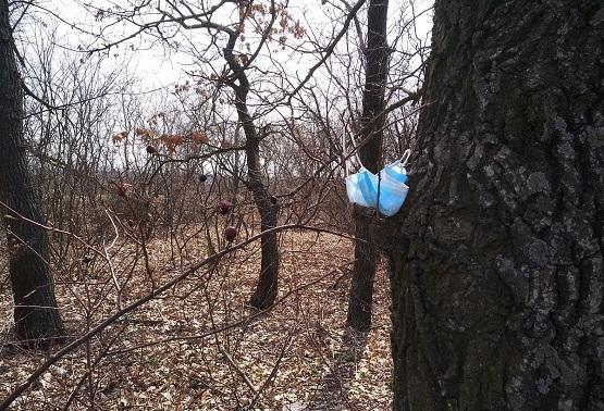 Медицинская маска на дереве