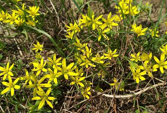 Полянка с желтыми цветами