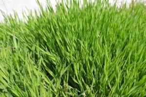 Сочная зелень апреля 2021 года